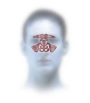 The ethmoid sinuses are key to treating most sinus infections as all other sinuses drain through or next to them.