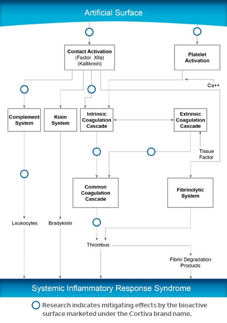 cortiva-surface-flowchart