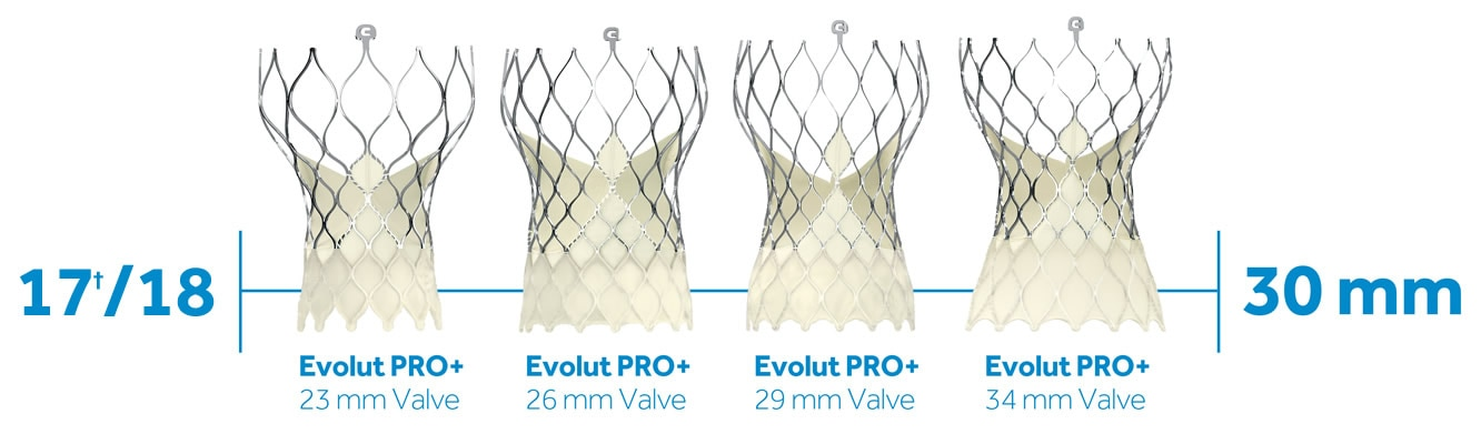Evolut PRO+ valves in sizes from 23mm to 34mm valves and 17 to 30 mm annulus sizes